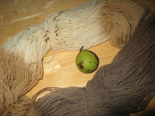 Black.walnuts.dyeing.oops